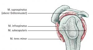 Abb 01 Seitliche Ansicht der Schulter mit den Muskelansätzen der Rotatorenmanschette